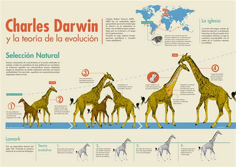 Evolution Theory - Infographic on Behance